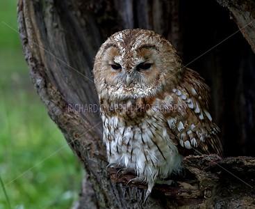 BWC OWLS_078