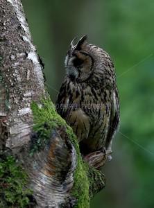 BWC OWLS_122