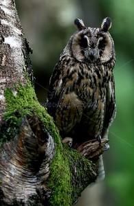 BWC OWLS_114