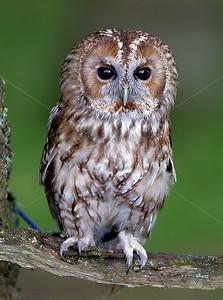 BWC OWLS_017