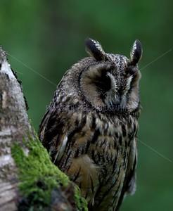 BWC OWLS_130