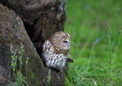 BWC OWLS_052