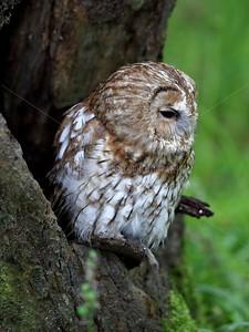 BWC OWLS_053