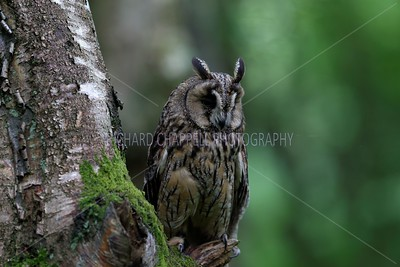 BWC OWLS_120
