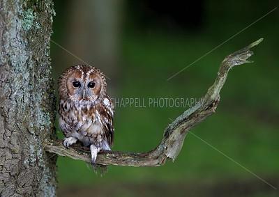 BWC OWLS_007