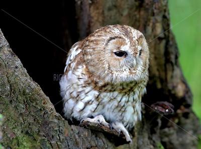 BWC OWLS_059