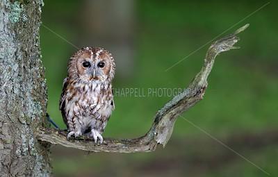 BWC OWLS_015