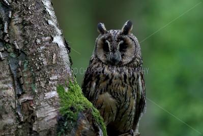 BWC OWLS_128