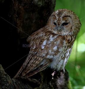BWC OWLS_100