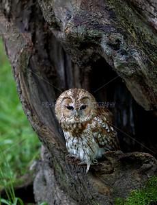 BWC OWLS_088