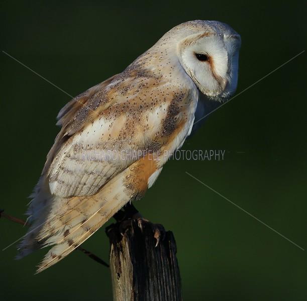 BWC OWLS_805