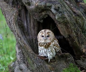 BWC OWLS_044