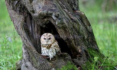 BWC OWLS_043
