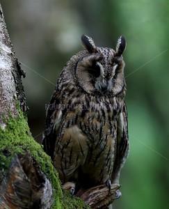 BWC OWLS_118