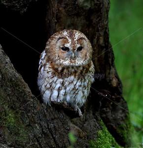 BWC OWLS_072