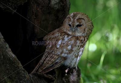 BWC OWLS_104