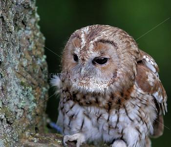BWC OWLS_020