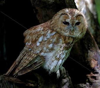 BWC OWLS_095