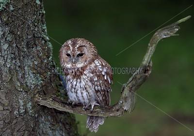 BWC OWLS_040