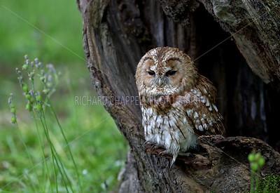 BWC OWLS_081
