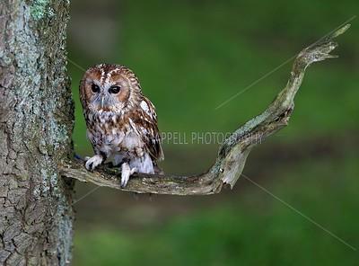 BWC OWLS_001