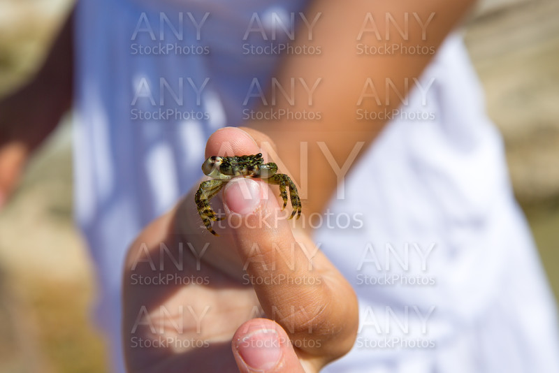Kid holding little baby crab in hand during beach vacation
