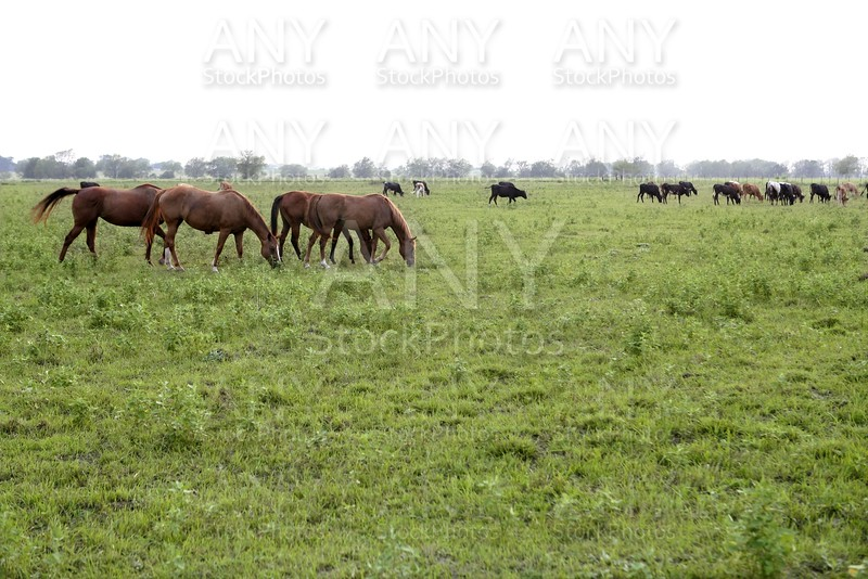 Horser view outdoors eating grass in the meadow landscape, nature