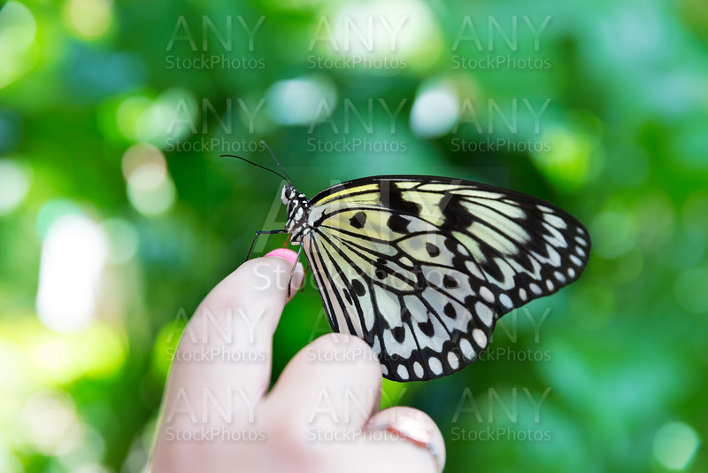 hand finger Rice Paper butterfly Idea leuconoe