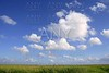 Blue sky in Florida Everglades wetlands green plants horizon