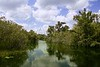 Mangroove river in everglades Florida landscape view