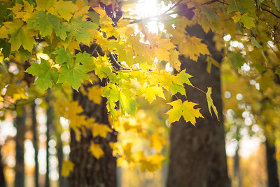 Yellow in Autumn
