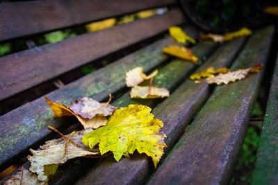 Last of the birch