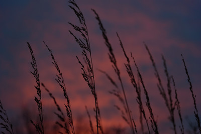 Indian grass sunrise