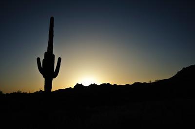 Saguaro cactus at sunrise in the Sonoran Desert.