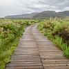 Mono Lake path to tufa towers