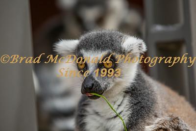 BRAD McDONALD TARONGA ZOO 201701140164