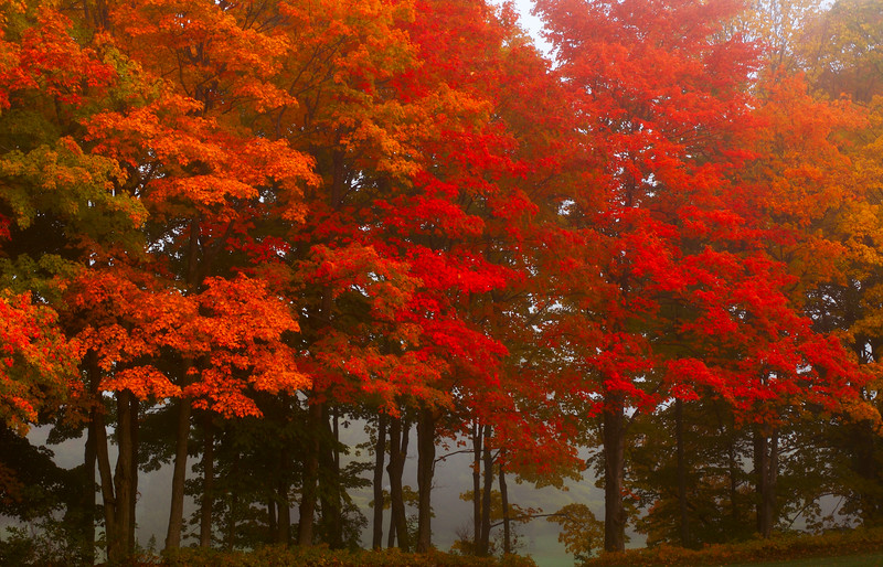 Fall color and fog in Door County WI