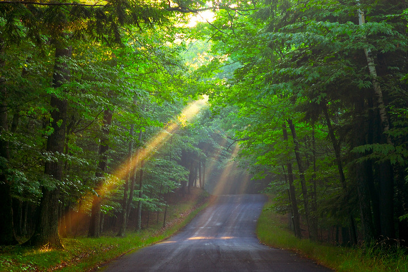 God beams on a forest road in Door County WI.