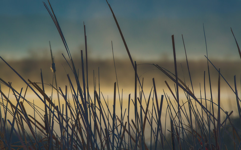 The Grass Life 2