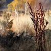 Washoe Lake's Colors in Fall Oct31 ©2013JPEG