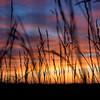 Iowa Grass Sunset 16x9 May 2016  ©2016MelissaFaithKnight&FaithPhotographyNV_6946