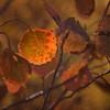 12x8 Textures of Orange ©2016MelissaFaithKnight&FaithPhotographyNV_1280