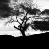Pyramid's Snaggle Tree 2 B&W ©2014MelissaFaithKnight_MG_1525-