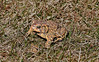 04 10 15 Toad_2309