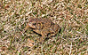 04 12 15 Toad_2309