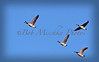 12 30 15 geese flying_8484