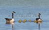 Baby Geese_6968