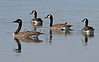 09-04-14 Four Geese_2485
