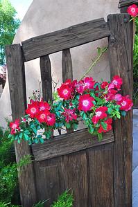 Chimayo Roses