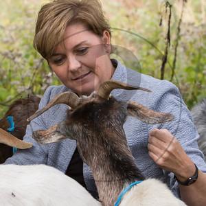 Goats-80